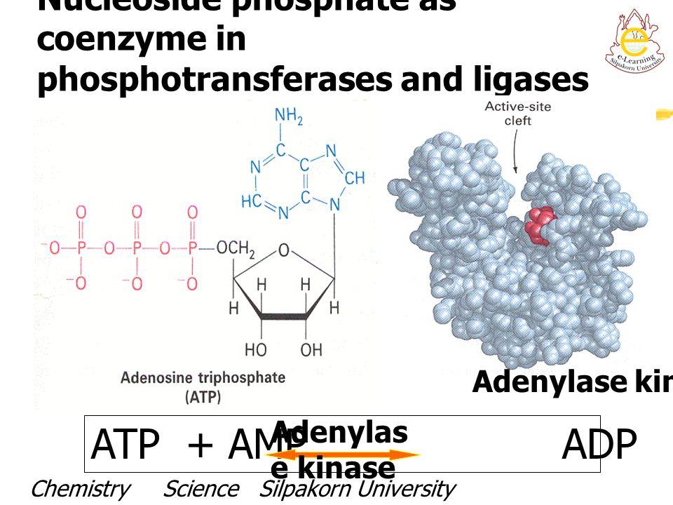 Nucleoside phosphate as coenzyme in phosphotransferases and ligases ATP + AMP ADP + ADP Adenylase kinase Chemistry Science Silpakorn UniversityDr. Por