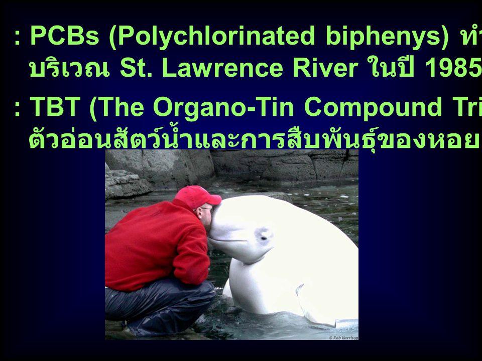 : PCBs (Polychlorinated biphenys) ทำให้ Beluga whale ตาย บริเวณ St. Lawrence River ในปี 1985 : TBT (The Organo-Tin Compound Tributyl Tin) มีผลต่อ ตัวอ