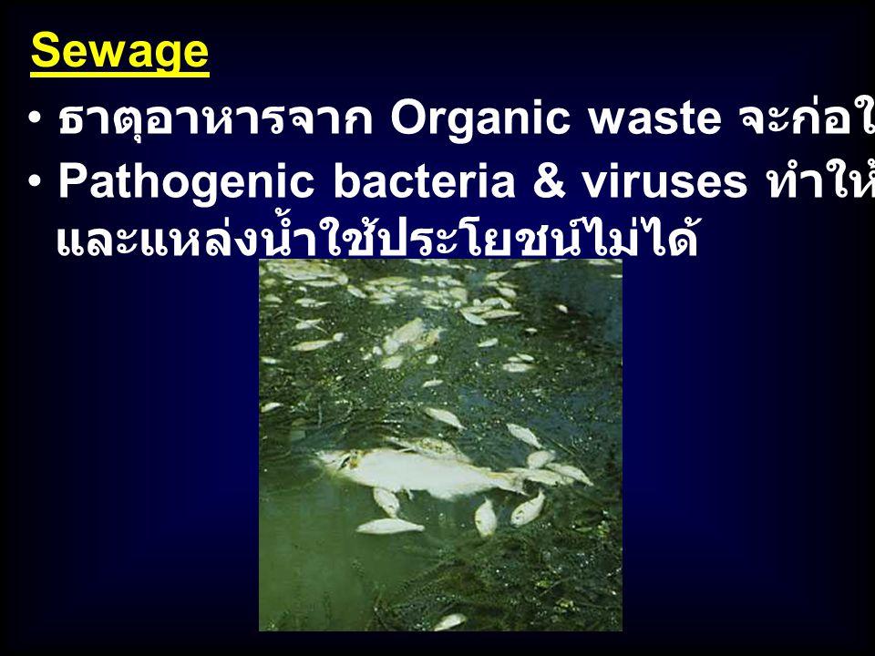 Sewage Pathogenic bacteria & viruses ทำให้อาหารทะเลปนเปื้อน และแหล่งน้ำใช้ประโยชน์ไม่ได้ ธาตุอาหารจาก Organic waste จะก่อให้เกิด Eutrophication