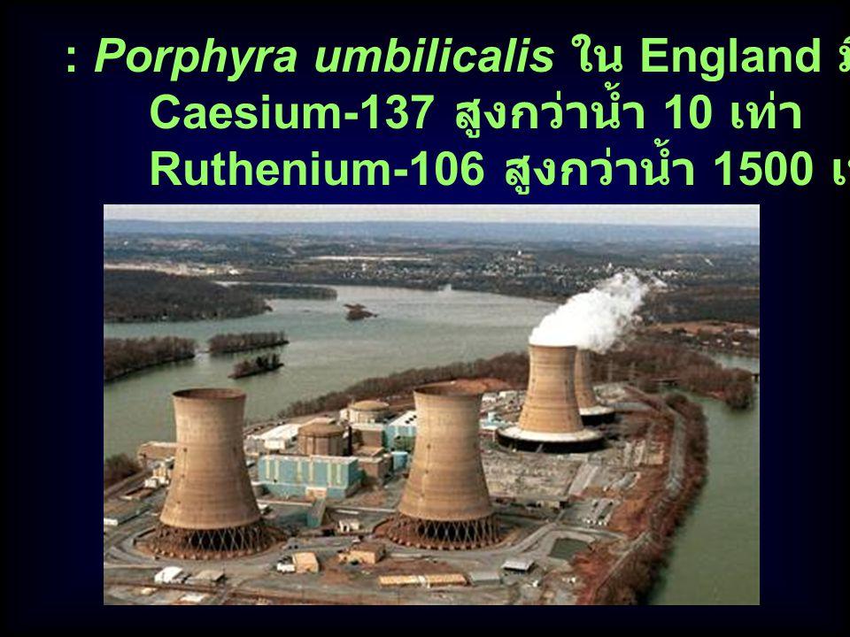 : Porphyra umbilicalis ใน England มีความเข้มข้นของ Caesium-137 สูงกว่าน้ำ 10 เท่า Ruthenium-106 สูงกว่าน้ำ 1500 เท่า