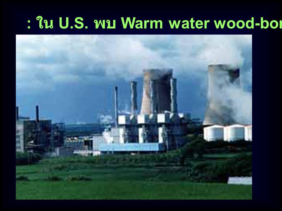 : ใน U.S. พบ Warm water wood-boring ทำลายเรือ