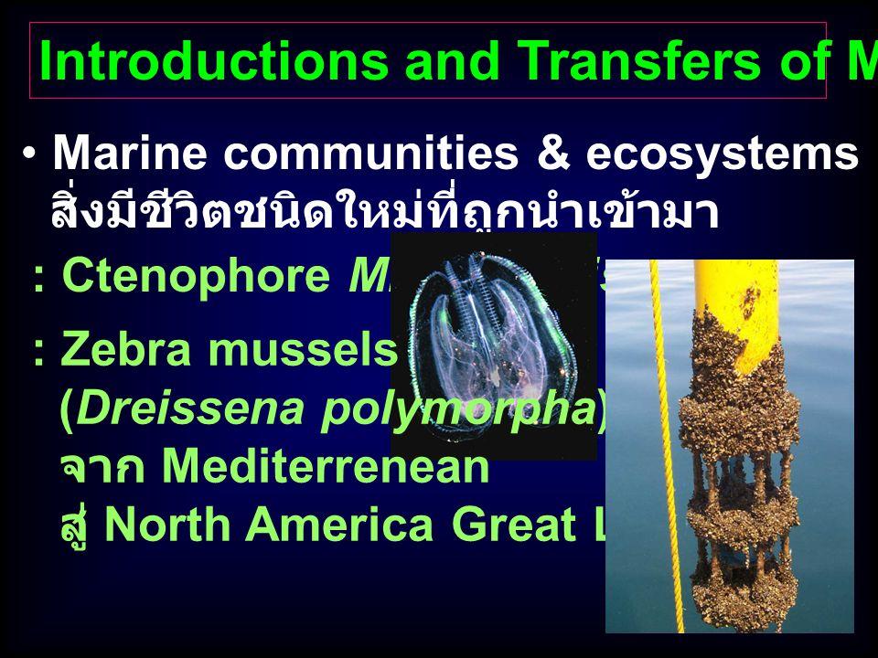 Marine communities & ecosystems เปลี่ยนแปลงจาก สิ่งมีชีวิตชนิดใหม่ที่ถูกนำเข้ามา Introductions and Transfers of Marine Organisms : Ctenophore Mnemiops