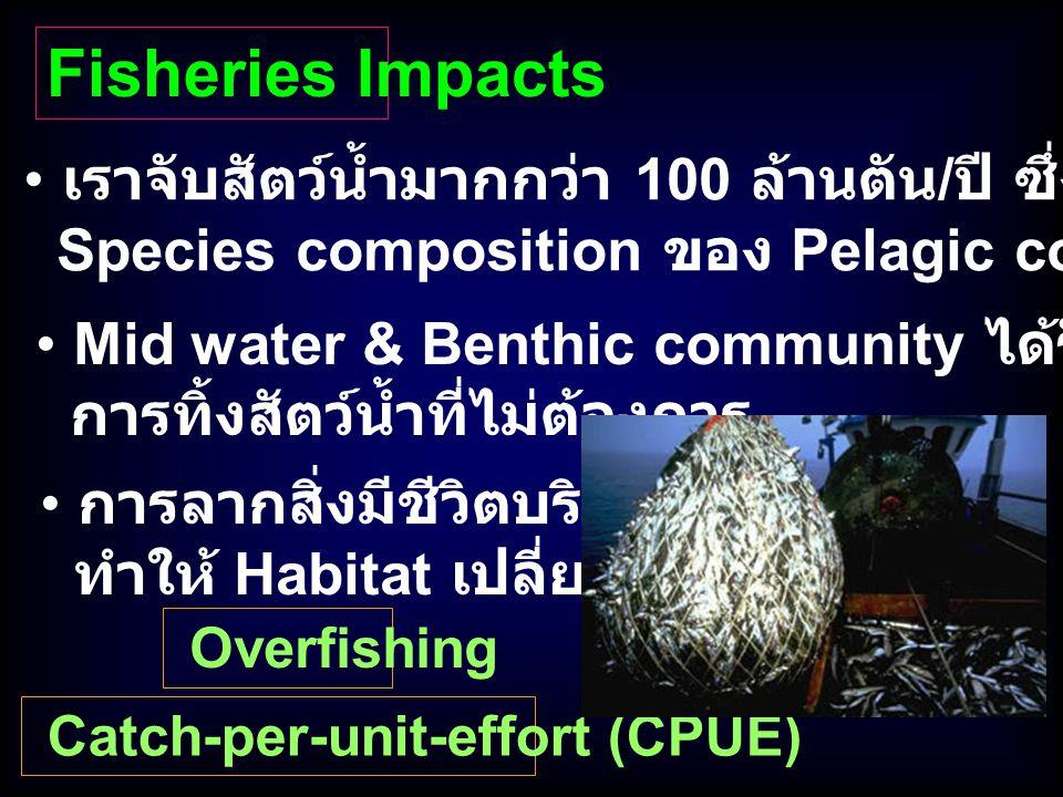 เราจับสัตว์น้ำมากกว่า 100 ล้านตัน / ปี ซึ่งส่งผลกระทบต่อ Species composition ของ Pelagic communities Mid water & Benthic community ได้รับผลกระทบจาก กา