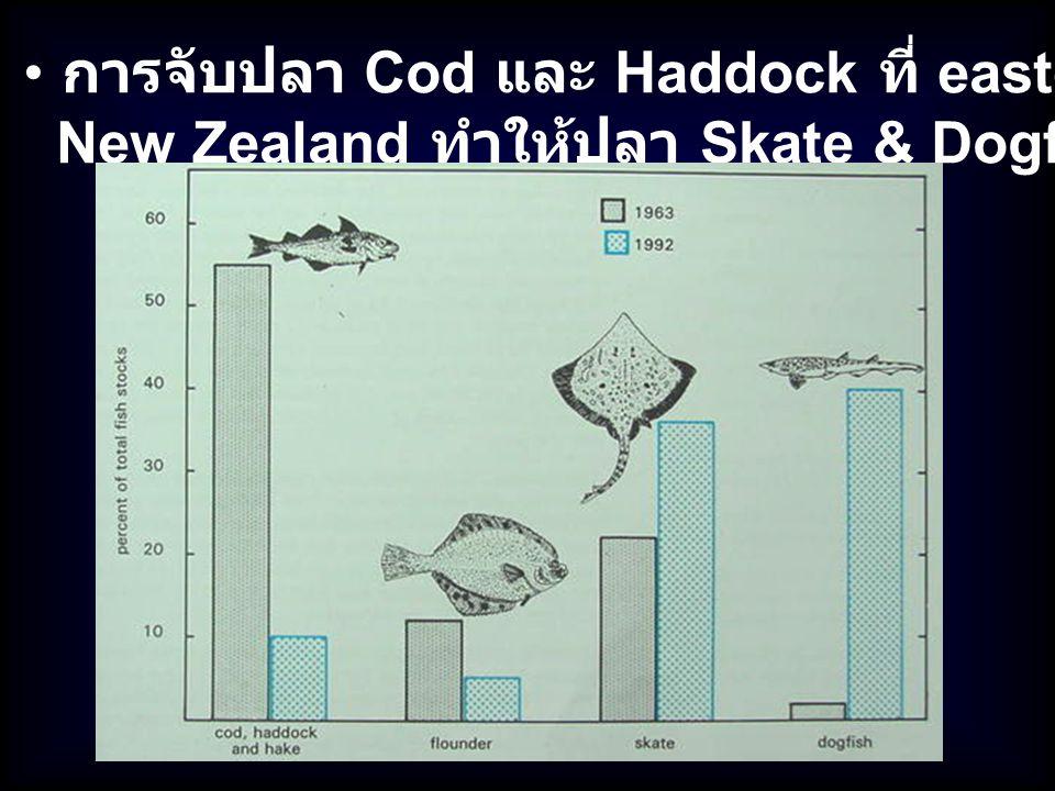 การจับปลา Cod และ Haddock ที่ eastern Canada & New Zealand ทำให้ปลา Skate & Dogfish เพิ่มขึ้น 30 - 45 %