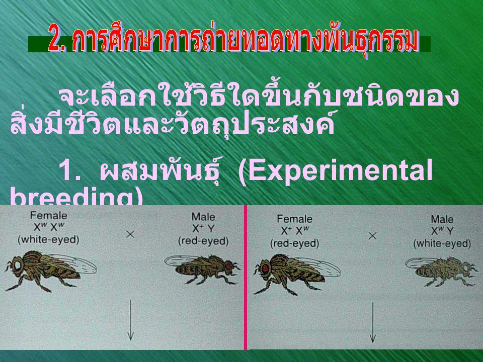 จะเลือกใช้วิธีใดขึ้นกับชนิดของ สิ่งมีชีวิตและวัตถุประสงค์ 1. ผสมพันธุ์ (Experimental breeding)