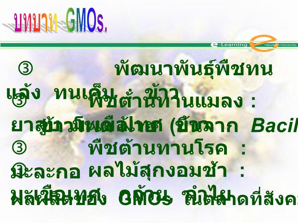 พัฒนาพันธุ์พืชทน แล้ง ทนเค็ม : ข้าว  พืชต้านทานแมลง : ยาสูบ มะเขือเทศ ข้าว  พืชต้านทานโรค : มะละกอ  ผลไม้สุกงอมช้า : มะเขือเทศ, กล้วย, ลำไย ข้าวโ
