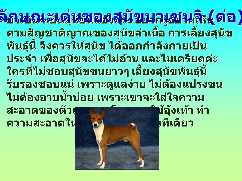 บาเซนจิเป็นสุนัขที่แข็งแรง อยากรู้อยากเห็น ตามสัญชาติญาณของสุนัขล่าเนื้อ การเลี้ยงสุนัข พันธุ์นี้ จึงควรให้สุนัข ได้ออกกำลังกายเป็น ประจำ เพื่อสุนัขจะได้ไม่อ้วน และไม่เครียดค่ะ ใครที่ไม่ชอบสุนัขขนยาวๆ เลี้ยงสุนัขพันธุ์นี้ รับรองชอบแน่ เพราะดูแลง่าย ไม่ต้องแปรงขน ไม่ต้องอาบน้ำบ่อย เพราะเขาจะใส่ใจความ สะอาดของตัวเองมาก โดยการใช้อุ้งเท้า ทำ ความสะอาดให้ตัวเอง ราวกับแมวทีเดียว ลักษณะเด่นของสุนัขบาเซนจิ ( ต่อ )