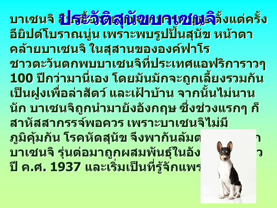 บาเซนจิเป็นสุนัขที่มีนิสัยดื้อ แต่จะเป็นมิตรกับทุก คนในครอบครัว รวมทั้งเด็กๆ และสัตว์ทั่วไป หลายคนอาจคิดว่ามันเป็นหมาประสาทที่เห็นรถ เมื่อไหร่เป็นเห่าและไล่เมื่อนั้น ฉะนั้น คุณควรล่าม โซ่มันทุกครั้งที่อยู่นอกบ้าน บาเซนจิมีเสียงเห่าไม่ เหมือนสุนัขทั่วไป กล่าวคือเมื่อมันสำราญใจเสียง เห่าของมันจะฟังไพเราะคล้ายเสียงเพลง แต่จะ เห่าหอนหรือร้องกรี๊ดเมื่ออารมณ์ไม่ดี นิสัยสุนัขบาเซนจิ