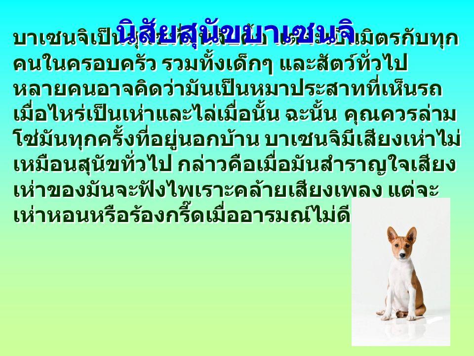 บาเซนจิเป็นสุนัขที่ร่าเริง ฉลาด และซุกซน บางครั้งอาจจะหลีกเร้นตัวจากคนแปลกหน้าบ้าง แต่โดยรวมแล้ว นับว่ามันเข้ากับคนได้ดี แต่ถ้า มันต้องอาศัยอยู่รวมกับสุนัขอื่น บาเซนจิอาจจะ ก่อปัญหาบ้าง เพราะสัญชาติญาณของการ อยู่ รวมกันเป็นฝูง จะทำให้ทะเลาะวิวาท กับสุนัขตัว อื่น เพื่อแย่งชิงความเป็นผู้นำ เจ้าของอาจต้องทน หนวกหูบ้าง แต่ก็ไม่นานหรอก พอรู้ผลแพ้ชนะ ใครจะครองตำแหน่งจ่าฝูง เหตุการณ์ก็สงบ นิสัยสุนัขบาเซนจิ