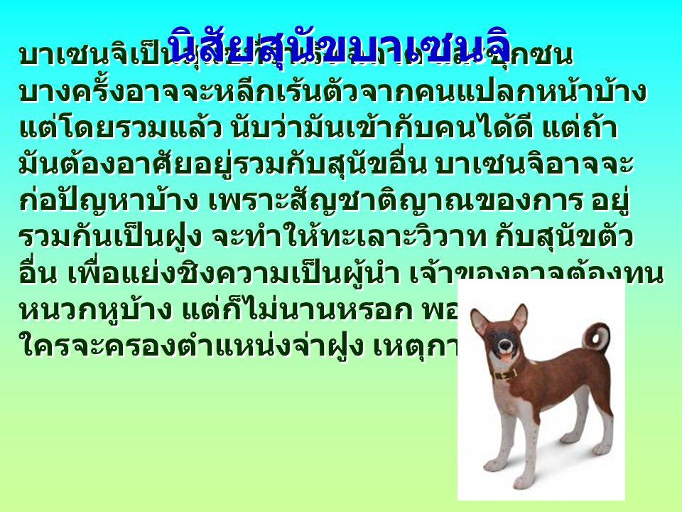 บาเซนจิเป็นสุนัขที่ร่าเริง ฉลาด และซุกซน บางครั้งอาจจะหลีกเร้นตัวจากคนแปลกหน้าบ้าง แต่โดยรวมแล้ว นับว่ามันเข้ากับคนได้ดี แต่ถ้า มันต้องอาศัยอยู่รวมกับ