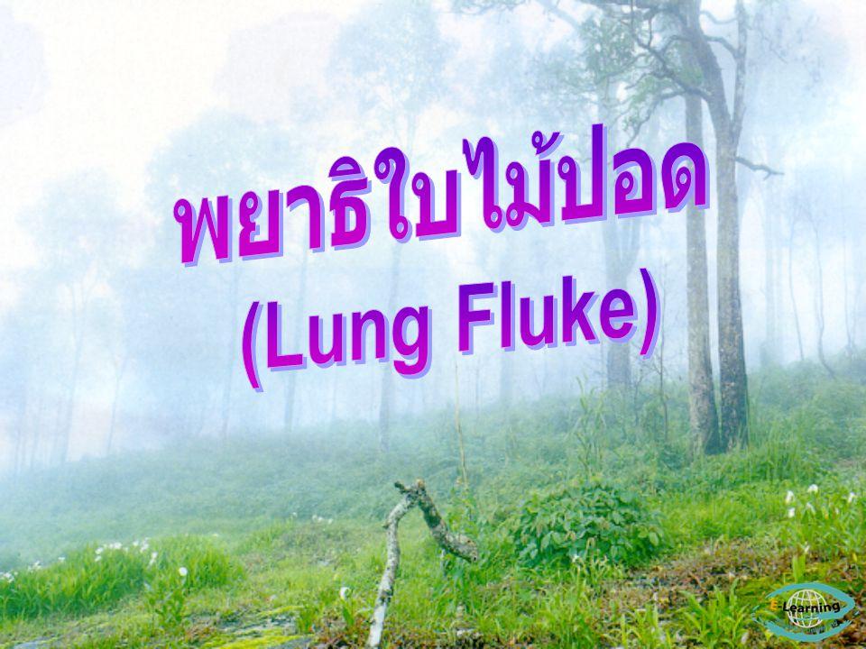 พยาธิใบไม้ปอด (Lung Fluke) - เป็นพวกที่อาศัยอยู่ใน ปอดของโฮสต์ - ทำให้เกิดโรค Paragonimiasis - ได้แก่ Paragonimus spp.