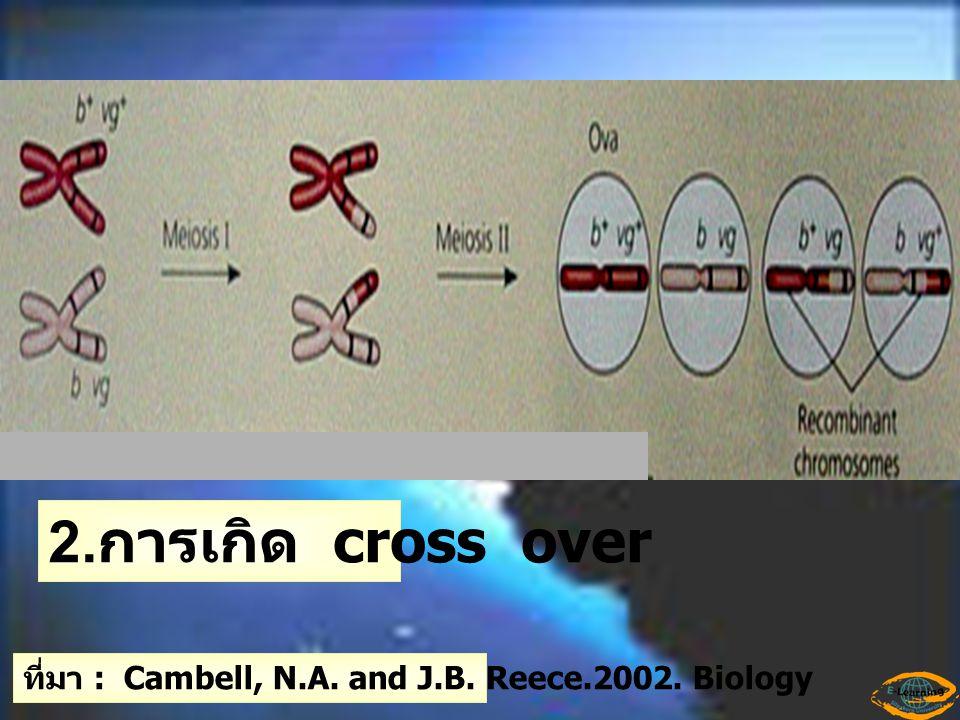 Genetic Recombinatio n - การจัดเรียงตัวใหม่ ของยีนเกิดจาก 1.