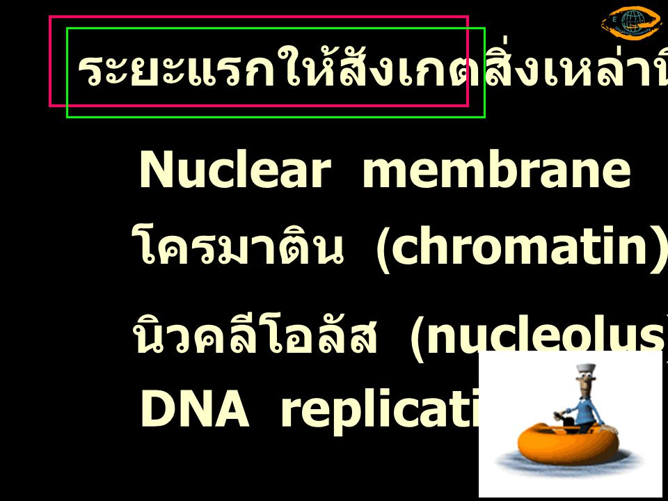 ให้อธิบายการเปลี่ยนแปลงของโครโมโซม Metaphase I, Anaphase I และ Telophase I ที่มา :Snustad, D.P and M.J.
