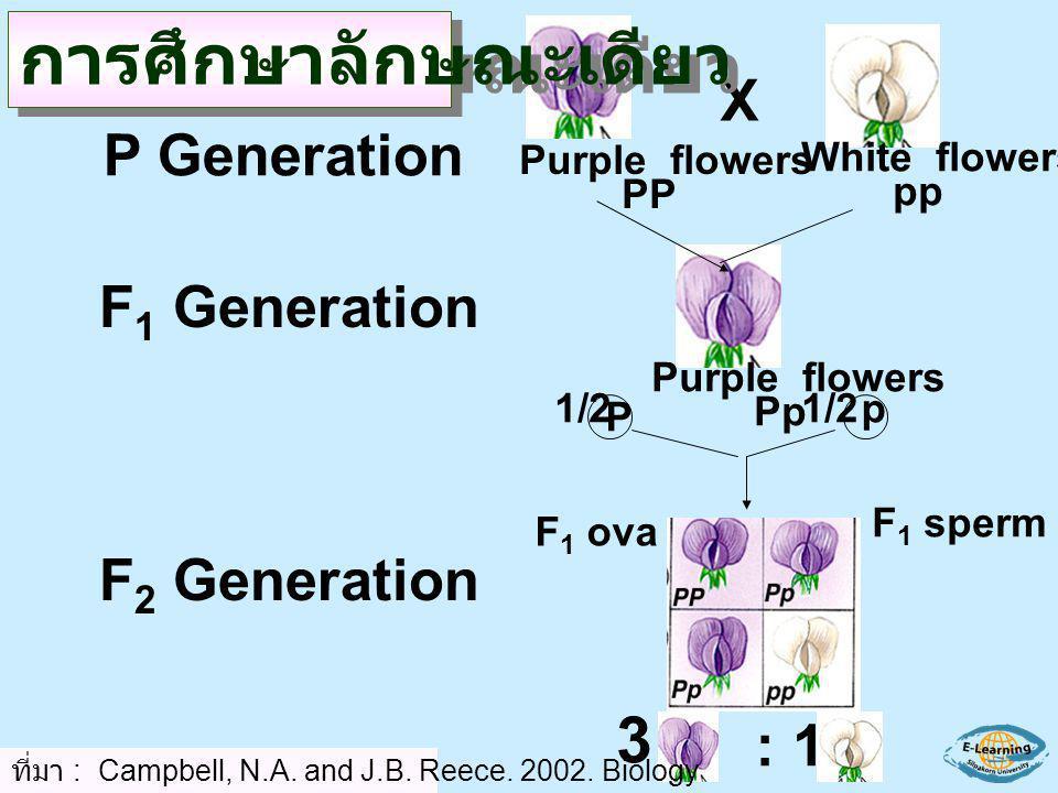 3 :1 X Purple flowers PP White flowers pp Purple flowers Pp p P 1/2 F 1 sperm F 1 ova P Generation F 1 Generation F 2 Generation ที่มา : Campbell, N.A