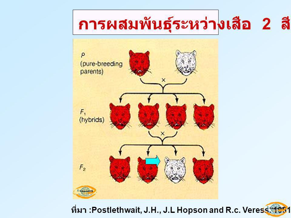 การผสมพันธุ์ระหว่างเสือ 2 สี ที่มา :Postlethwait, J.H., J.L Hopson and R.c. Veress. 1991. Biology