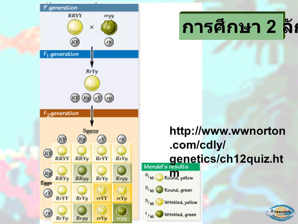http://www.wwnorton.com/cdly/ genetics/ch12quiz.ht m การศึกษา 2 ลักษณะ