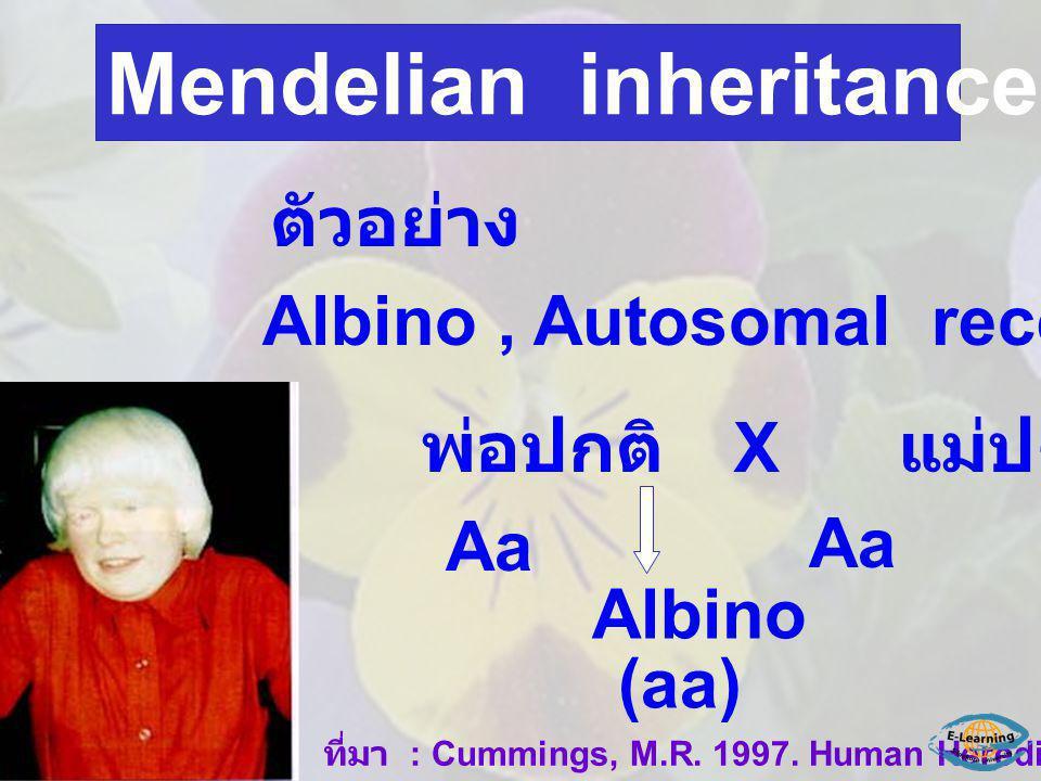 ตัวอย่าง Albino, Autosomal recessive gene (a) พ่อปกติ X แม่ปกติ Aa Albino (aa) ที่มา : Cummings, M.R. 1997. Human Heredity Mendelian inheritance in hu