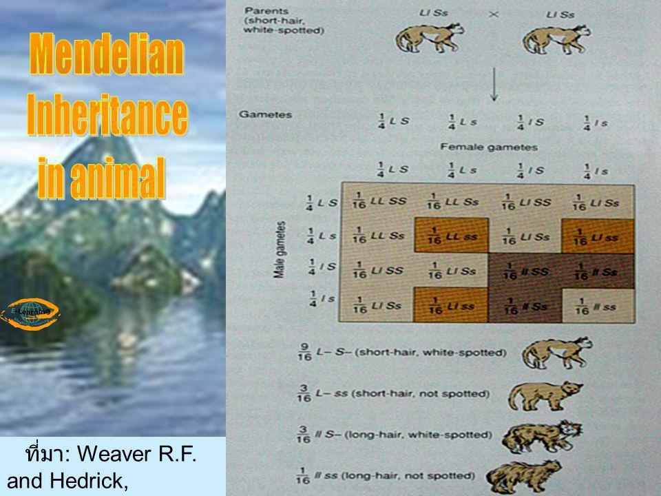 ที่มา : Weaver R.F. and Hedrick, P.W. 1997. Genetics