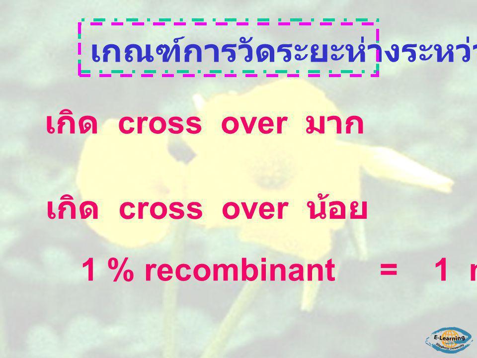 เกณฑ์การวัดระยะห่างระหว่างยีน เกิด cross over มาก ยีนห่างกันมาก เกิด cross over น้อย ยีนห่างกันน้อย 1 % recombinant = 1 map unit