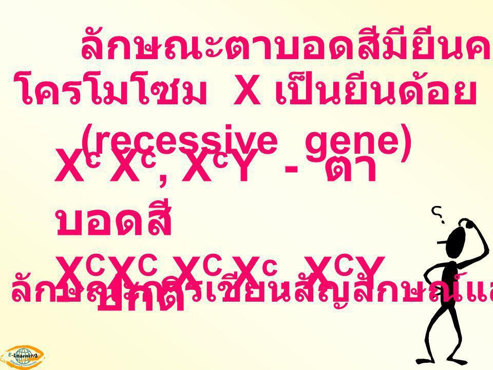 โครโมโซม X เป็นยีนด้อย (recessive gene) X c X c, X c Y - ตา บอดสี X C X C,X C X c, X C Y - ปกติ ลักษณะการเขียนสัญลักษณ์และฟีโนไทป์ ลักษณะตาบอดสีมียีนค