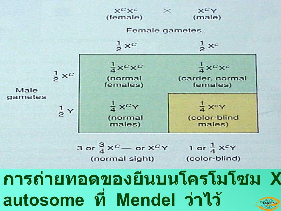 การถ่ายทอดของยีนบนโครโมโซม X จะแตกต่างจากยีนบน autosome ที่ Mendel ว่าไว้
