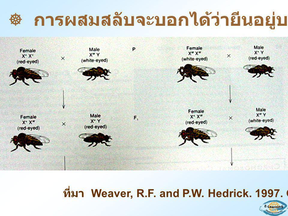 ที่มา Weaver, R.F. and P.W. Hedrick. 1997. Genetics  การผสมสลับจะบอกได้ว่ายีนอยู่บนโครโมโซมชนิดใด