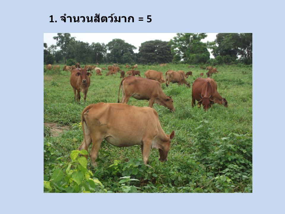 12. มีโรงงานแปรรูปโรงฆ่าสัตว์ อุตสาหกรรม รองรับ = 5