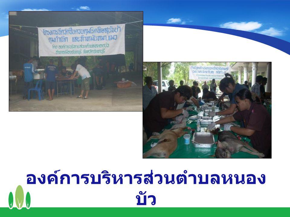 องค์การบริหารส่วนตำบลหนอง บัว