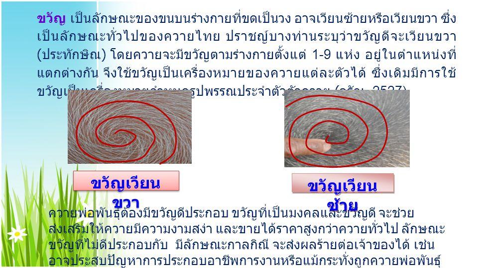 ขวัญ เป็นลักษณะของขนบนร่างกายที่ขดเป็นวง อาจเวียนซ้ายหรือเวียนขวา ซึ่ง เป็นลักษณะทั่วไปของควายไทย ปราชญ์บางท่านระบุว่าขวัญดีจะเวียนขวา ( ประทักษิณ ) โ
