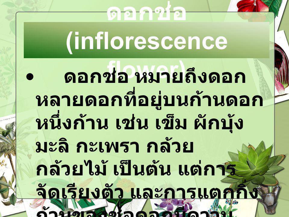 ดอกช่อ (inflorescence flower) ดอกช่อ หมายถึงดอก หลายดอกที่อยู่บนก้านดอก หนึ่งก้าน เช่น เข็ม ผักบุ้ง มะลิ กะเพรา กล้วย กล้วยไม้ เป็นต้น แต่การ จัดเรียง