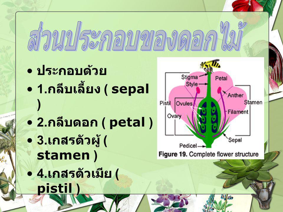 ประกอบด้วย 1. กลีบเลี้ยง ( sepal ) 2. กลีบดอก ( petal ) 3. เกสรตัวผู้ ( stamen ) 4. เกสรตัวเมีย ( pistil )