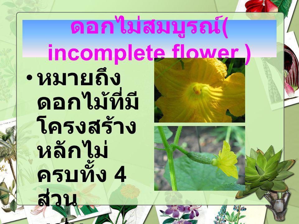 ดอกไม่สมบูรณ์ ( incomplete flower ) หมายถึง ดอกไม้ที่มี โครงสร้าง หลักไม่ ครบทั้ง 4 ส่วน เช่น ฟักทอง แตงกวา