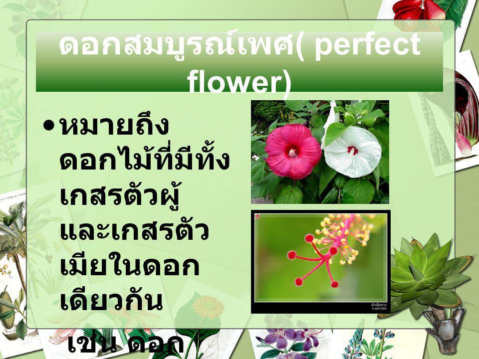 ตัวอย่างดอกสมบูรณ์เพศ