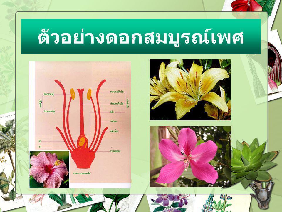 3.ข้อใดดอกไม้มีวงครบทั้ง 4 วง ก. ดอกกุหลาบข. ดอกแตงกวา ค.