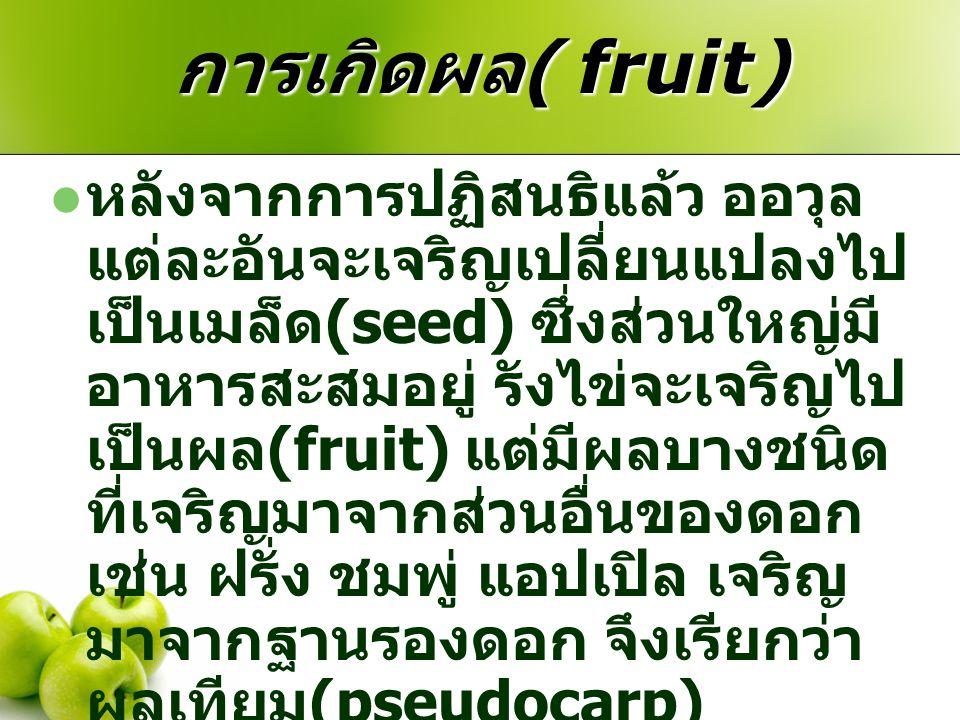 การเกิดผล ( fruit) หลังจากการปฏิสนธิแล้ว ออวุล แต่ละอันจะเจริญเปลี่ยนแปลงไป เป็นเมล็ด (seed) ซึ่งส่วนใหญ่มี อาหารสะสมอยู่ รังไข่จะเจริญไป เป็นผล (frui