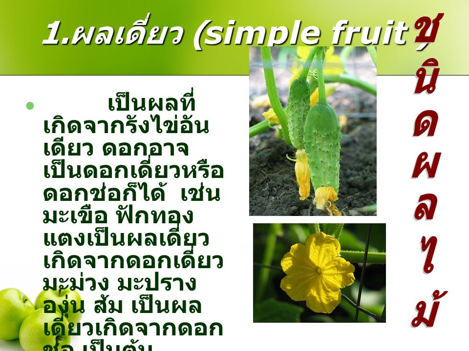 1. ผลเดี่ยว (simple fruit ) เป็นผลที่ เกิดจากรังไข่อัน เดียว ดอกอาจ เป็นดอกเดี่ยวหรือ ดอกช่อก็ได้ เช่น มะเขือ ฟักทอง แตงเป็นผลเดี่ยว เกิดจากดอกเดี่ยว
