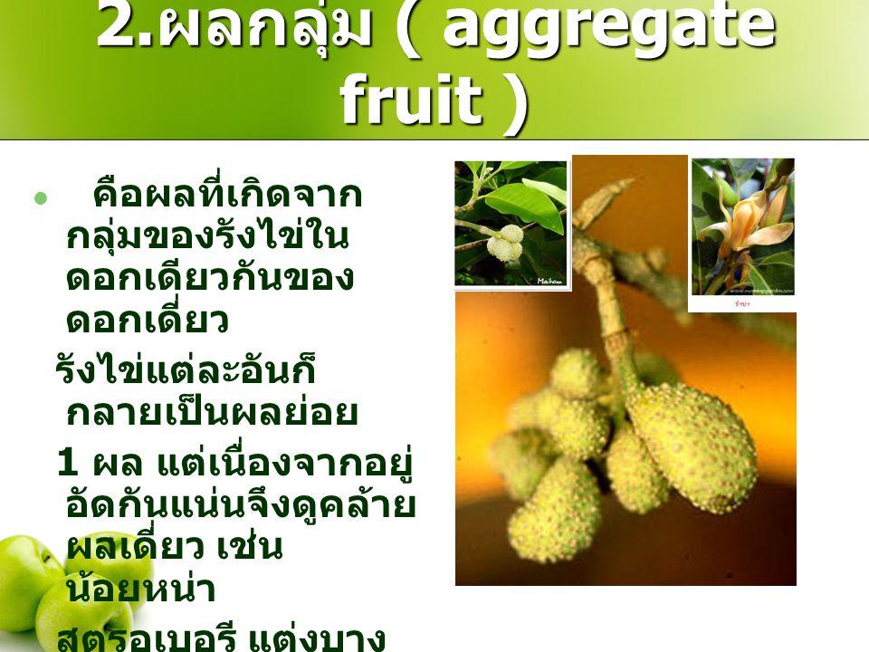 2. ผลกลุ่ม ( aggregate fruit ) คือผลที่เกิดจาก กลุ่มของรังไข่ใน ดอกเดียวกันของ ดอกเดี่ยว รังไข่แต่ละอันก็ กลายเป็นผลย่อย 1 ผล แต่เนื่องจากอยู่ อัดกันแ