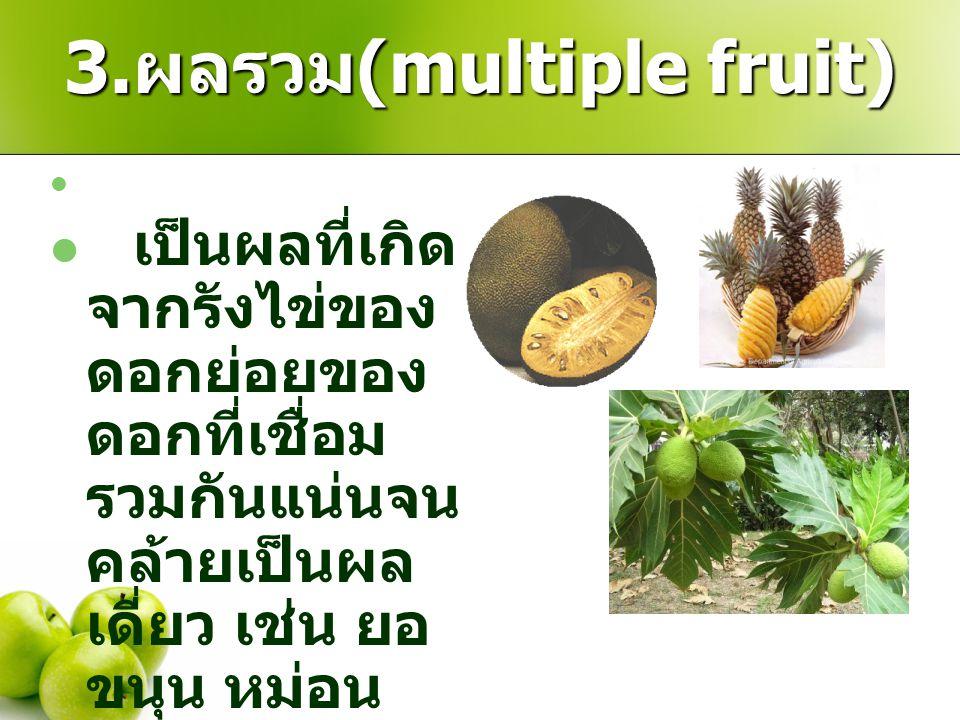3. ผลรวม (multiple fruit) เป็นผลที่เกิด จากรังไข่ของ ดอกย่อยของ ดอกที่เชื่อม รวมกันแน่นจน คล้ายเป็นผล เดี่ยว เช่น ยอ ขนุน หม่อน สับปะรด สาเก