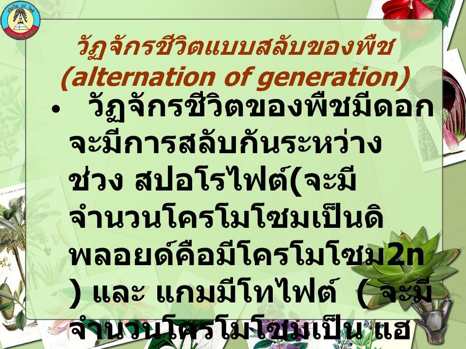 วัฏจักรชีวิตแบบสลับของพืช (alternation of generation) วัฏจักรชีวิตของพืชมีดอก จะมีการสลับกันระหว่าง ช่วง สปอโรไฟต์ ( จะมี จำนวนโครโมโซมเป็นดิ พลอยด์คื
