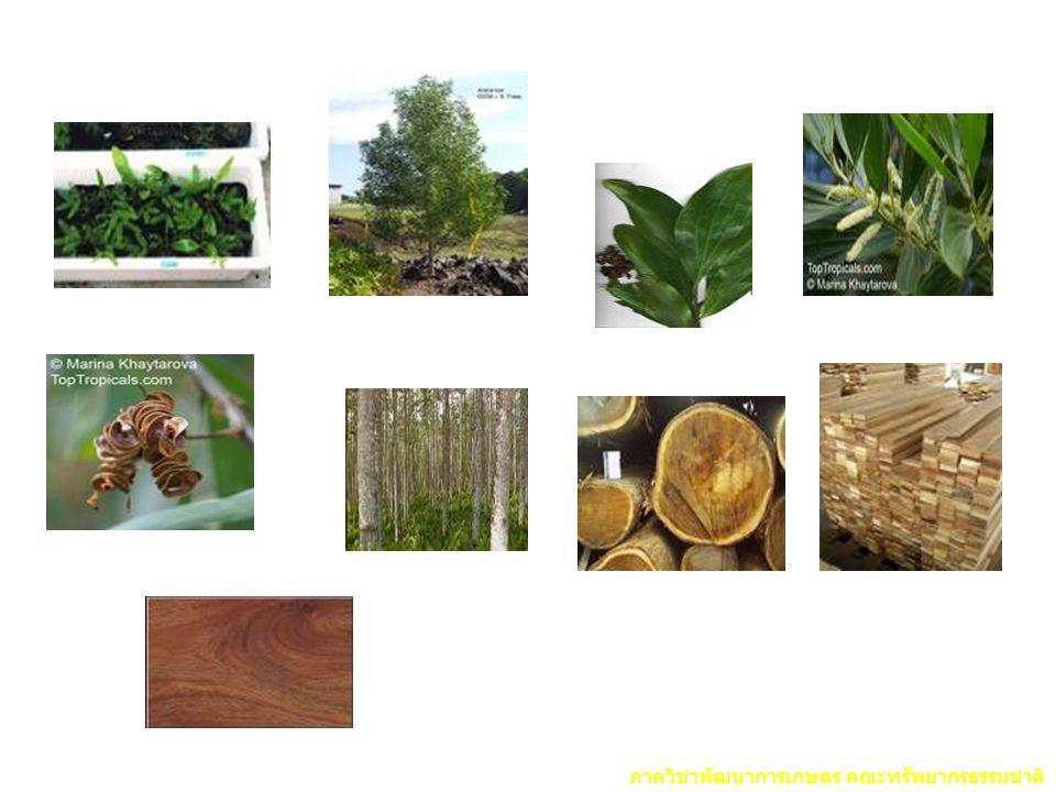 ภาควิชาพัฒนาการเกษตร คณะทรัพยากรธรรมชาติ