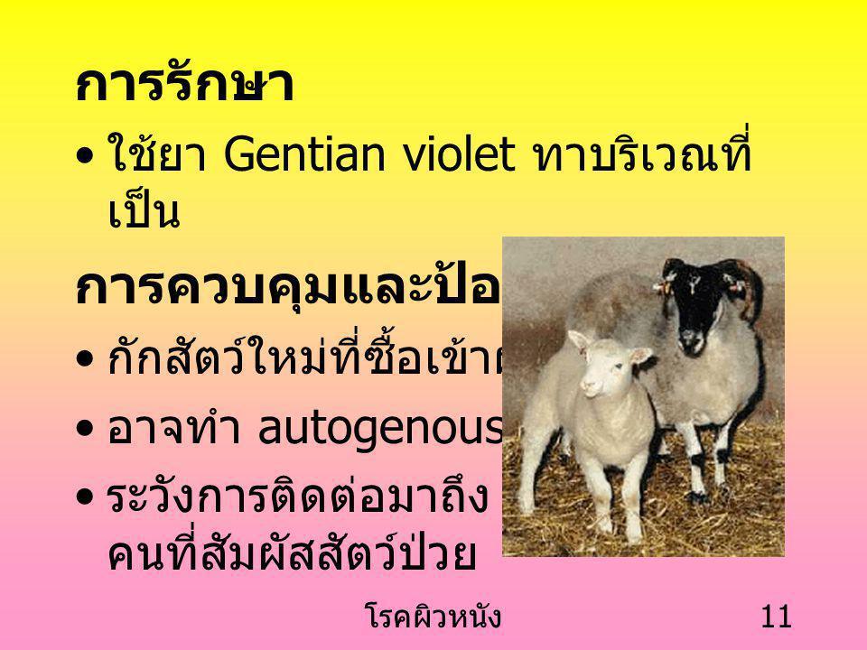 โรคผิวหนัง 10 ลูกสัตว์จะมีอาการรุนแรงกว่าสัตว์ ใหญ่ อาจตายได้หากเป็นรุนแรงจน กินอาหารไม่ได้ สะเก็ดจะหายไปเองภายใน 3-4 สัปดาห์ หายแล้วทำให้มีภูมิคุ้ม ค