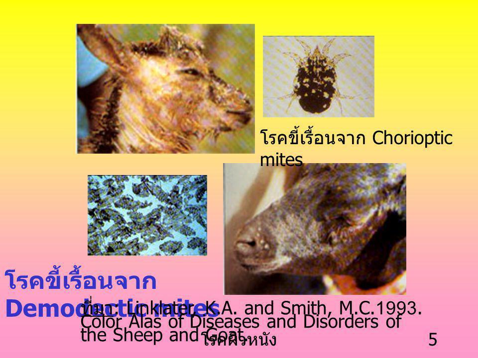 โรคผิวหนัง 5 โรคขี้เรื้อนจาก Chorioptic mites โรคขี้เรื้อนจาก Demodectic mites ที่มา : Linklater, K.A.