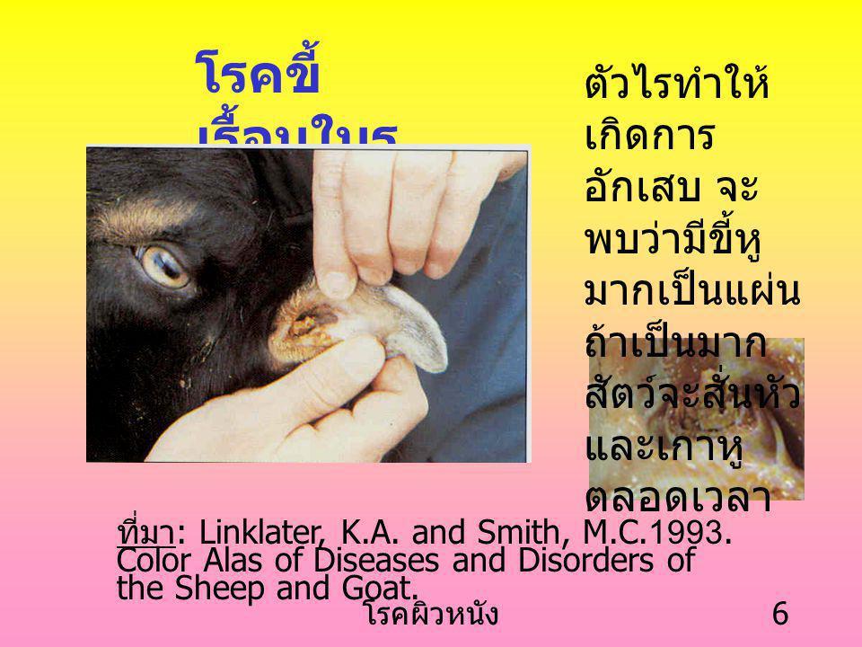 โรคผิวหนัง 6 โรคขี้ เรื้อนในรู หู ตัวไรทำให้ เกิดการ อักเสบ จะ พบว่ามีขี้หู มากเป็นแผ่น ถ้าเป็นมาก สัตว์จะสั่นหัว และเกาหู ตลอดเวลา ที่มา : Linklater, K.A.