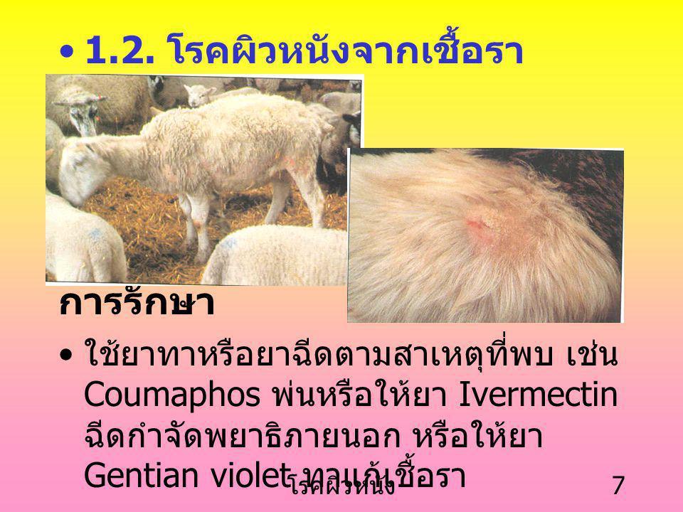 โรคผิวหนัง 6 โรคขี้ เรื้อนในรู หู ตัวไรทำให้ เกิดการ อักเสบ จะ พบว่ามีขี้หู มากเป็นแผ่น ถ้าเป็นมาก สัตว์จะสั่นหัว และเกาหู ตลอดเวลา ที่มา : Linklater,