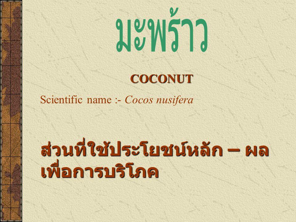 COCONUT Scientific name :- Cocos nusifera ส่วนที่ใช้ประโยชน์หลัก – ผล เพื่อการบริโภค