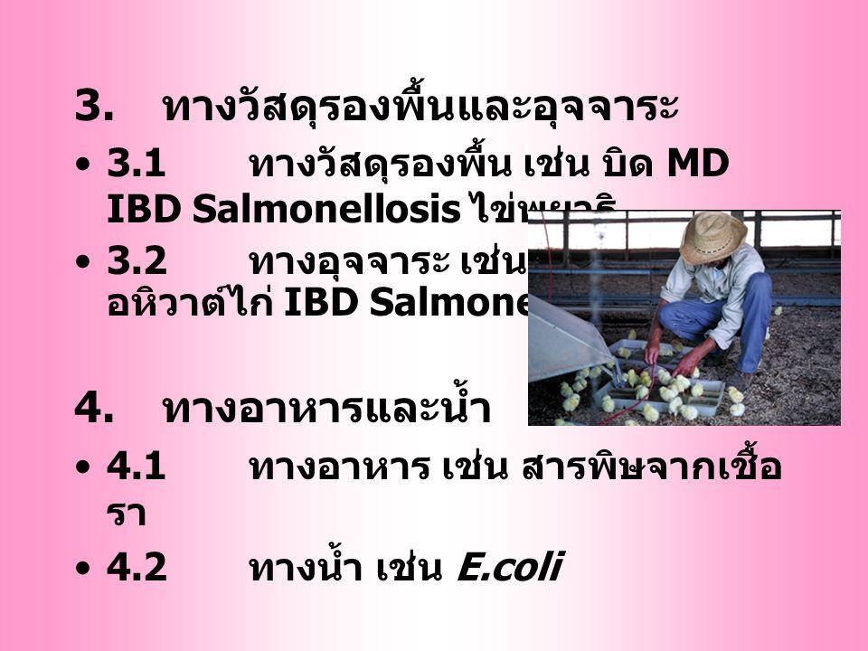 การแพร่โรคของสัตว์ปีก 1. ทางไข่ (egg/ vertical transmission) 1.1Ovarian/ uterine transmission เช่น CRD, Pullorum, Leucosis เป็นต้น 1.2Shell penetratio