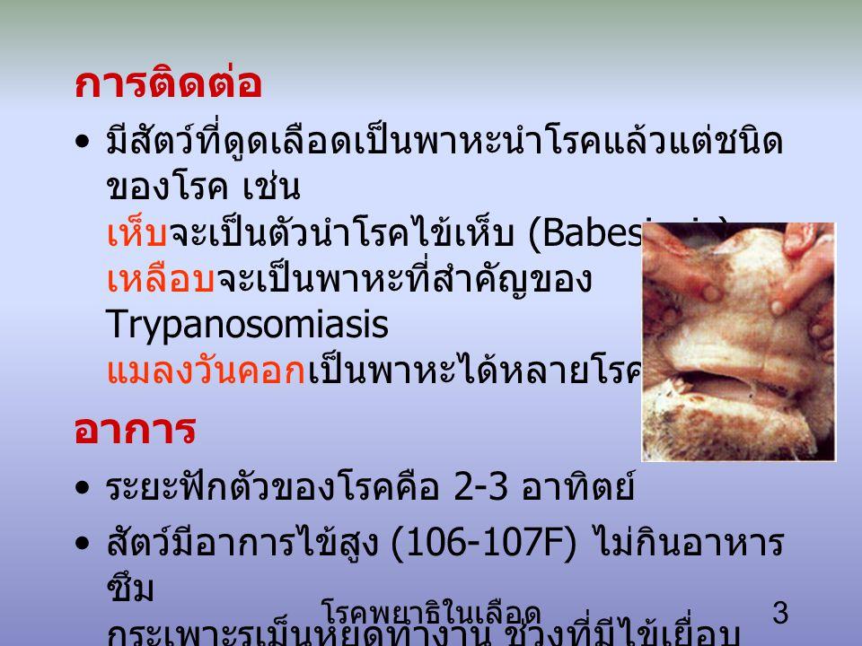 โรคพยาธิในเลือด 3 การติดต่อ มีสัตว์ที่ดูดเลือดเป็นพาหะนำโรคแล้วแต่ชนิด ของโรค เช่น เห็บจะเป็นตัวนำโรคไข้เห็บ (Babesiosis) เหลือบจะเป็นพาหะที่สำคัญของ Trypanosomiasis แมลงวันคอกเป็นพาหะได้หลายโรค อาการ ระยะฟักตัวของโรคคือ 2-3 อาทิตย์ สัตว์มีอาการไข้สูง (106-107F) ไม่กินอาหาร ซึม กระเพาะรูเม็นหยุดทำงาน ช่วงที่มีไข้เยื่อบุ ต่างๆ มีเลือดคั่ง แต่เมื่อเม็ดเลือดแดงแตก มากขึ้น เยื่อบุจะซีดและมีอาการอื่นร่วมด้วย