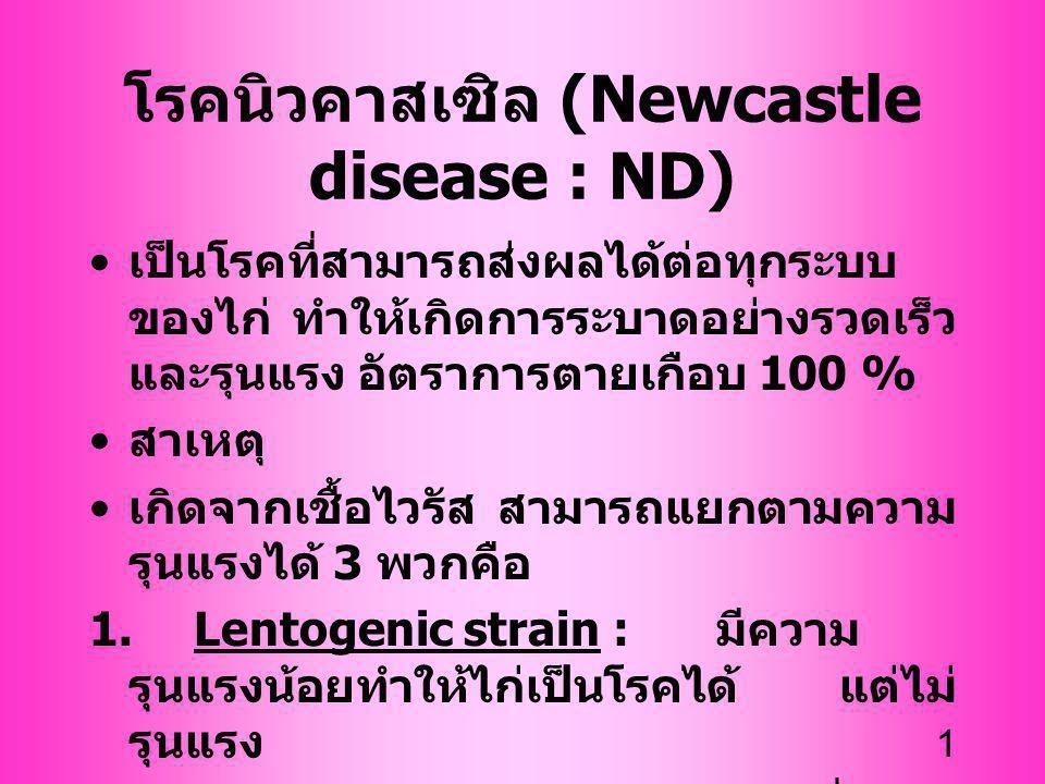 1 เป็นโรคที่สามารถส่งผลได้ต่อทุกระบบ ของไก่ ทำให้เกิดการระบาดอย่างรวดเร็ว และรุนแรง อัตราการตายเกือบ 100 % สาเหตุ เกิดจากเชื้อไวรัส สามารถแยกตามความ ร