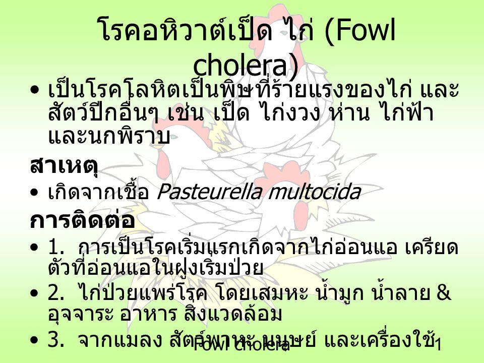 Fowl cholera1 โรคอหิวาต์เป็ด ไก่ (Fowl cholera) เป็นโรคโลหิตเป็นพิษที่ร้ายแรงของไก่ และ สัตว์ปีกอื่นๆ เช่น เป็ด ไก่งวง ห่าน ไก่ฟ้า และนกพิราบ สาเหตุ เ