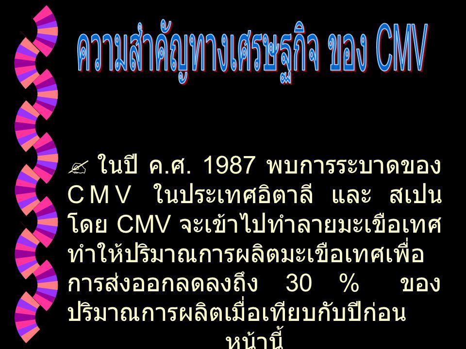 การถ่ายทอดของ CMV ผ่านทาง เมล็ด
